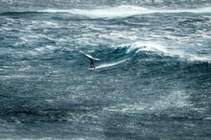 Surf/Wing